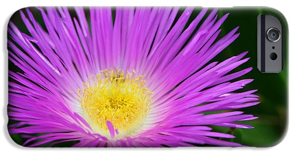 Fuchsia iPhone Cases - Ice Ice Baby - Flower Photography by Sharon Cummings iPhone Case by Sharon Cummings