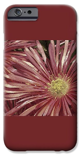 Nature Abstract iPhone Cases - Ice Plant Flowers No 2 iPhone Case by Ben and Raisa Gertsberg