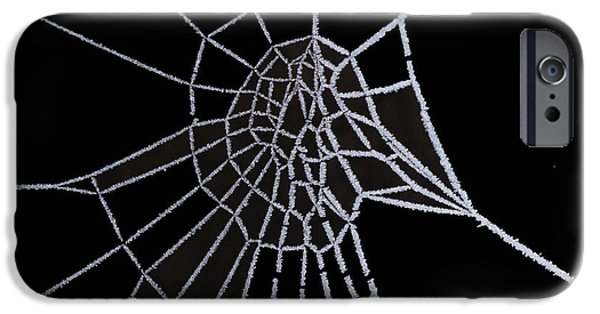 Black Spider iPhone Cases - Ice web iPhone Case by Carol Lynch