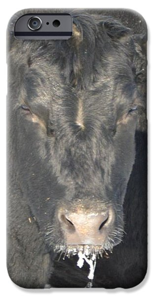 Iced Beef iPhone Case by Bonfire Photography