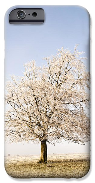 United iPhone Cases - Iced Tree iPhone Case by Anne Gilbert