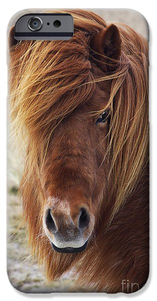 North Sea iPhone Cases - Iceland Horse iPhone Case by Angela Doelling AD DESIGN Photo and PhotoArt