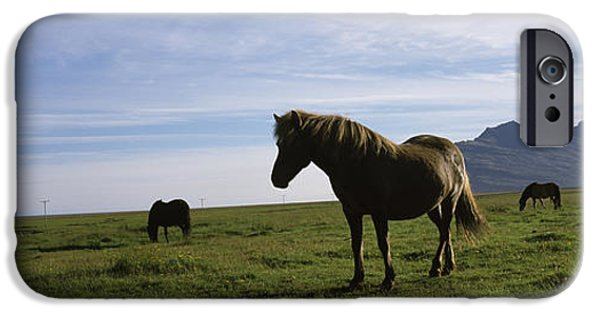Pet Photography iPhone Cases - Icelandic Horses In A Field, Svinafell iPhone Case by Panoramic Images