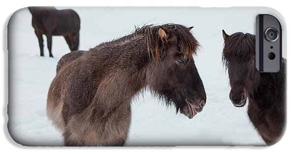 Horse iPhone Cases - Icelandic Horses With Winter Coats iPhone Case by Panoramic Images