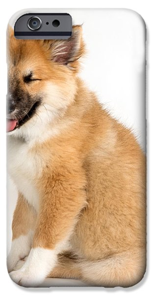 Commercial Photography iPhone Cases - Icelandic Sheepdog Puppy Squinting iPhone Case by Iris Richardson