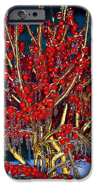Berry Pyrography iPhone Cases - Icy Berries iPhone Case by Don Allen