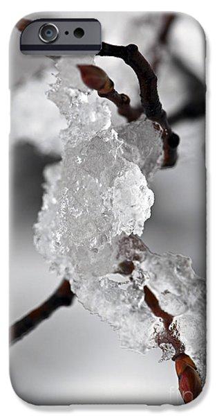 Snowy iPhone Cases - Icy elegance iPhone Case by Elena Elisseeva