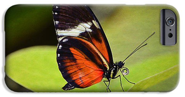 Close Up Floral iPhone Cases - If I Were a Butterfly... iPhone Case by Maria Angelica Maira