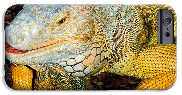 Iguana iPhone Cases - Iggy iPhone Case by Carey Chen