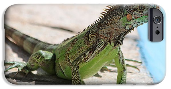 Iguana iPhone Cases - Iguana 1175 iPhone Case by Jack Schultz