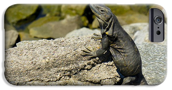 Iguana iPhone Cases - Iguana iPhone Case by Aged Pixel