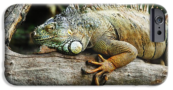 Beach Pyrography iPhone Cases - Iguana iPhone Case by Jelena Jovanovic