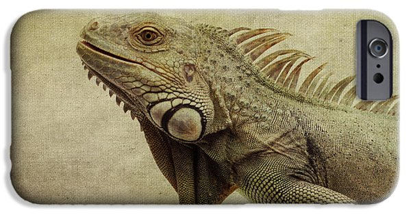 Iguana iPhone Cases - Iguana iPhone Case by Marina Kojukhova