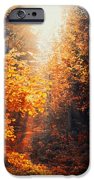 Pathway iPhone Cases - Illuminated Forest iPhone Case by Wim Lanclus