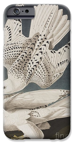 Falcon iPhone Cases - Illustration from Birds of America iPhone Case by John James Audubon