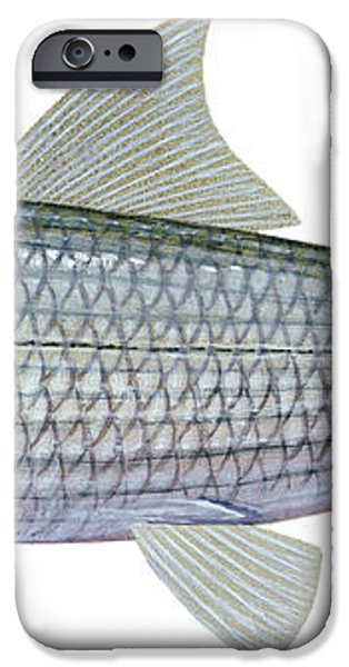 Illustration Of A Bonefish Albula iPhone Case by Carlyn Iverson