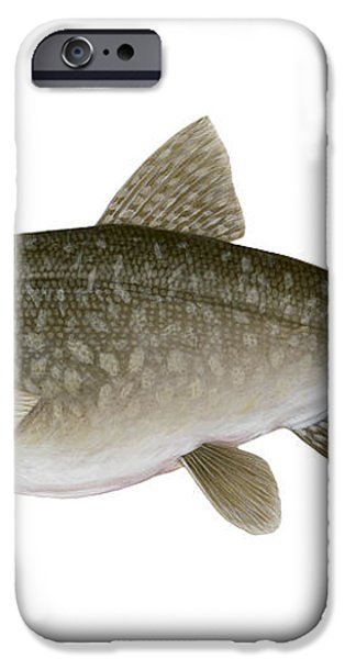 Illustration Of A Lake Trout Salvelinus iPhone Case by Carlyn Iverson