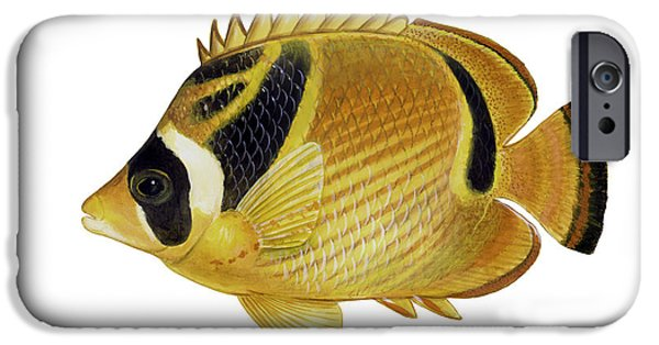 Raccoon Digital Art iPhone Cases - Illustration Of A Raccoon Butterflyfish iPhone Case by Carlyn Iverson