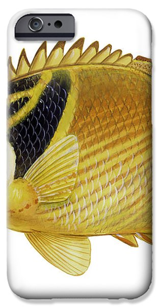 Illustration Of A Raccoon Butterflyfish iPhone Case by Carlyn Iverson