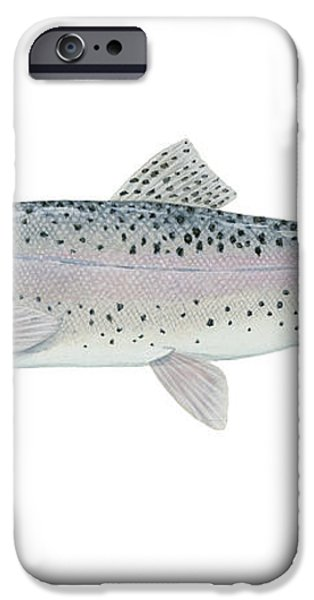 Illustration Of A Steelhead Trout iPhone Case by Carlyn Iverson