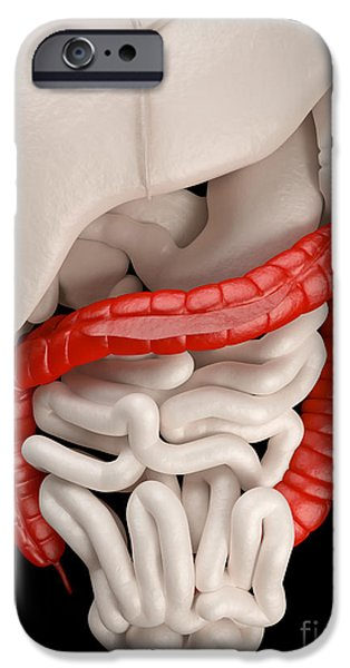 Sigmoid Colon iPhone Cases - Illustration Of Digestive System iPhone Case by David Marchal