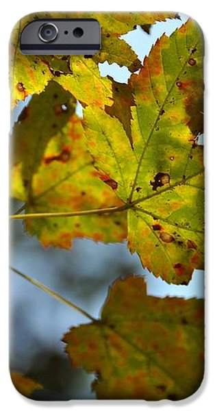 ILOVEFALL iPhone Case by JAMART Photography