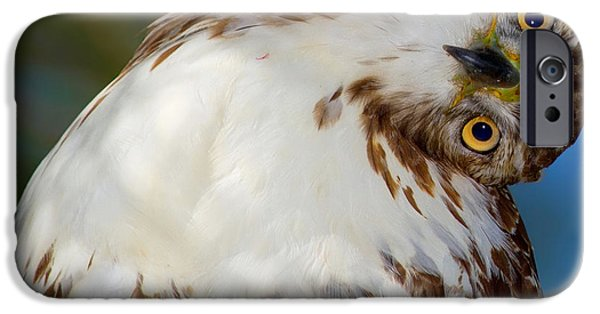 Recently Sold -  - Animals Photographs iPhone Cases - Im Confused iPhone Case by John Absher