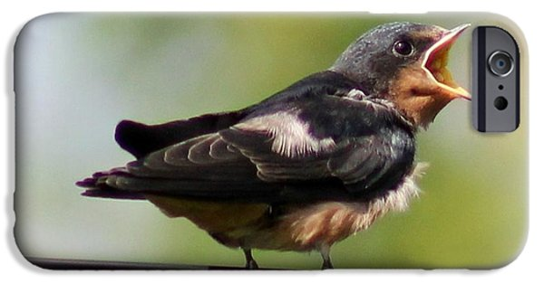 Barn Swallow iPhone Cases - Im Hungry iPhone Case by Lisa Hurylovich