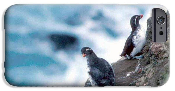 Auklets iPhone Cases - Im Not Talking To You Either iPhone Case by F Hughes