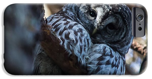 Disc iPhone Cases - Im watching you great grey owl iPhone Case by Eti Reid