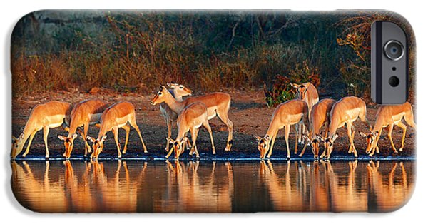 Herd iPhone Cases - Impala herd with reflections in water iPhone Case by Johan Swanepoel