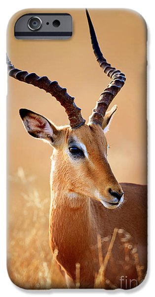 One Animal iPhone Cases - Impala male portrait iPhone Case by Johan Swanepoel