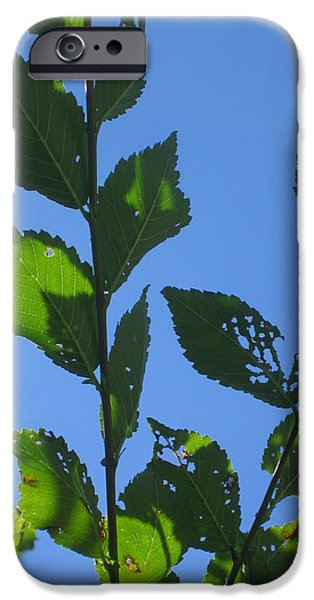 Guy Ricketts Photography iPhone Cases - Imperfect Leaves iPhone Case by Guy Ricketts