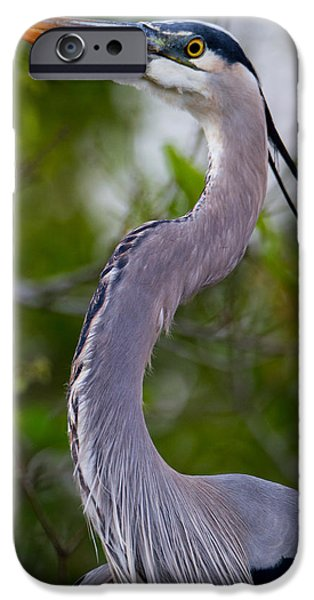 Forest iPhone Cases - Imperial Great Blue Heron iPhone Case by Andres Leon