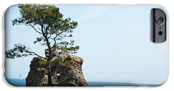 Tree Roots Photographs iPhone Cases - Impossible Nature iPhone Case by Mesha Zelkovich