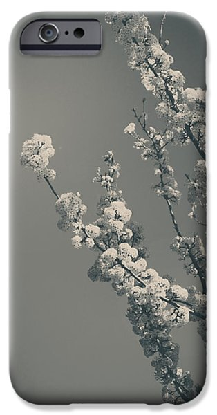 Blooming Photographs iPhone Cases - In a Beautiful World iPhone Case by Laurie Search