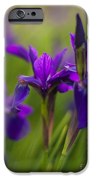 Iris iPhone Cases - In Beautiful Company iPhone Case by Mike Reid