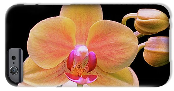 Phalaenopsis iPhone Cases - In Bloom iPhone Case by Rona Black