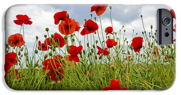 Ww1 iPhone Cases - In Flanders Fields iPhone Case by Ross G Strachan