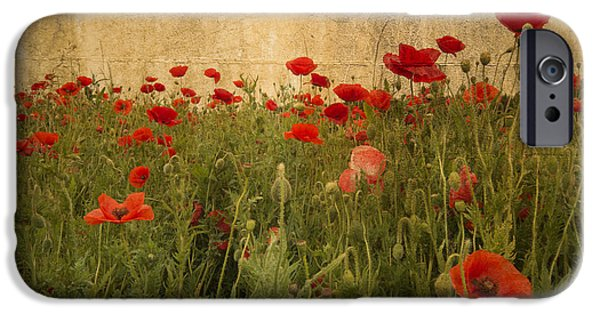 Recently Sold -  - World War One iPhone Cases - In Flanders Fields the poppies blow  iPhone Case by Rob Hawkins