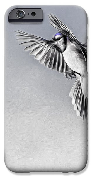 Bluejay iPhone Cases - In Flight Blue jay iPhone Case by Bill  Wakeley