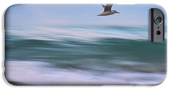 Flying Seagull iPhone Cases - In Flight iPhone Case by Laura  Fasulo
