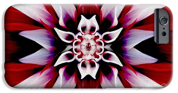 White Daisies iPhone Cases - In Full Bloom iPhone Case by Jon Neidert
