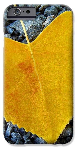 In Love ... iPhone Case by Juergen Weiss
