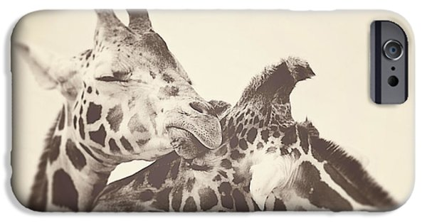 Giraffes iPhone Cases - In Love iPhone Case by Carrie Ann Grippo-Pike