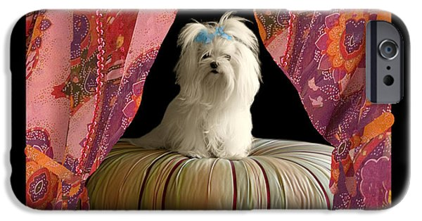 Dogs Digital Art iPhone Cases - In Memory of Ms Chloe - On Stage iPhone Case by Madeline Ellis