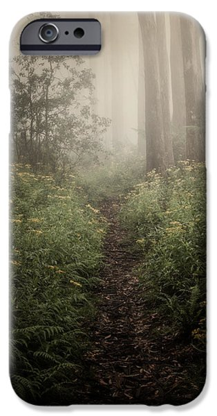 Fog iPhone Cases - In Silence iPhone Case by Amy Weiss