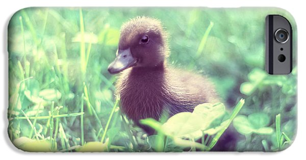 Duckling Photography iPhone Cases - In the Clover iPhone Case by Amy Tyler