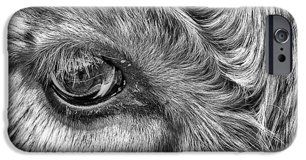 Species iPhone Cases - In The Eye iPhone Case by John Farnan