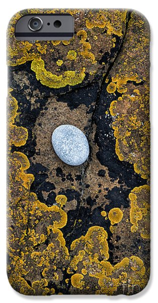 Lichen iPhone Cases - In the Eye of the Stone  iPhone Case by Tim Gainey